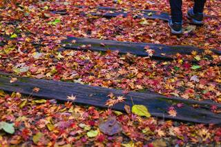 秋の廃線跡の写真・画像素材[3712492]