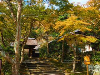 自然,紅葉,鎌倉,円覚寺