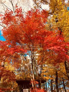 秋の写真・画像素材[1628399]