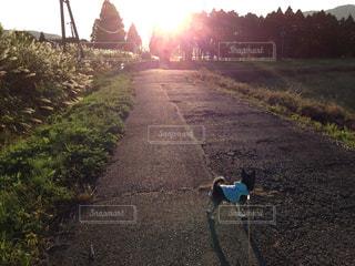 犬の写真・画像素材[252767]