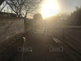犬,空,屋外,太陽,夕焼け,道路,光,樹木,道,歩道,夕陽,おさんぽ,イタグレ