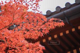 秋,紅葉,もみじ,日光,日光東照宮,栃木