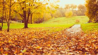 秋,紅葉,森林,夕暮れ