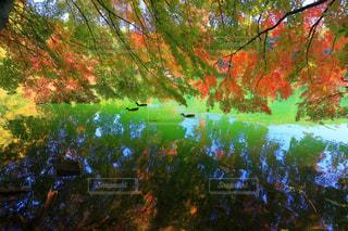 秋,紅葉,池