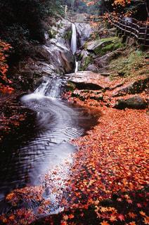 自然,秋,紅葉,滝