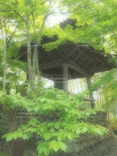 もみじと鐘の写真・画像素材[1607732]