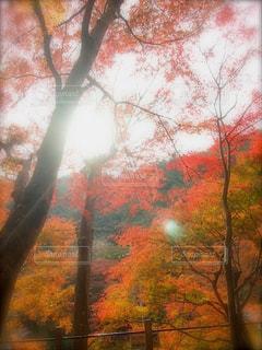 高尾山紅葉の写真・画像素材[1608107]