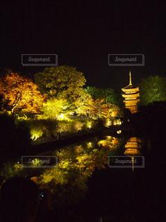 五重塔紅葉ライトアップの写真・画像素材[1626525]