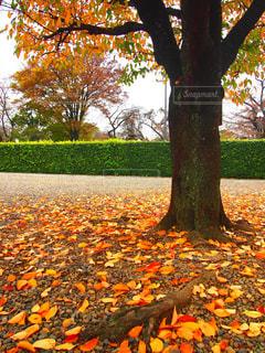カラフルな落ち葉🍂の写真・画像素材[1644465]