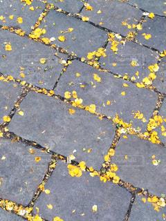 屋外,海外,葉っぱ,散歩,黄色,葉,鮮やか,落ち葉,道,旅行,広場,スペイン,野外
