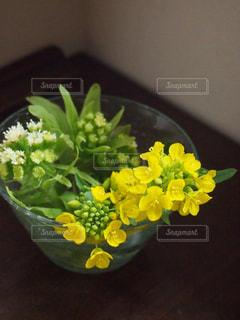 インテリア,花,黄色,菜の花,オシャレ,日本,イエロー,黄,yellow