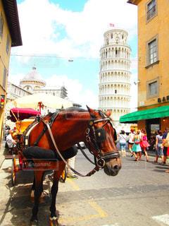 建物,屋外,海外,青空,散歩,観光地,旅行,旅,馬,馬車,イタリア,ピサの斜塔,ピザ