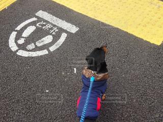 愛犬と朝の散歩の写真・画像素材[1858161]