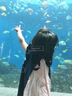 魚,後ろ姿,水,水族館,子供,女の子,後姿,三つ編み,可愛い,Snapmart,水槽,写真素材,フォトコンテスト
