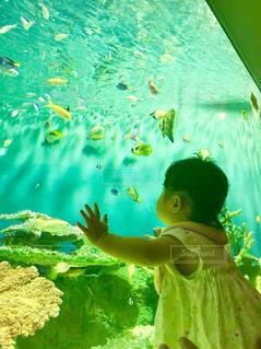 魚,後ろ姿,水,室内,水族館,子供,女の子,背中,人,後姿,可愛い,Snapmart,ワクワク,写真素材,フォトコンテスト