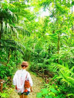 自然,緑,後ろ姿,沖縄,女の子,観光,大自然,背中,道,リラックス,人,後姿,Snapmart,西表島,休暇,満喫,写真素材,フォトコンテスト