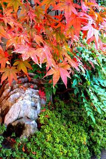 植物の木の成長の写真・画像素材[784660]