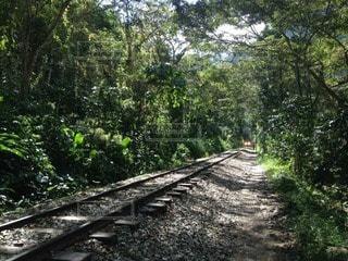 森林の写真・画像素材[54170]