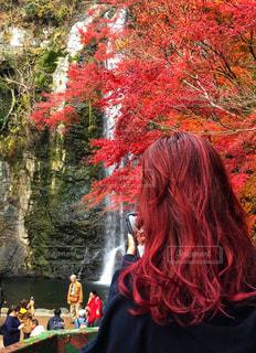紅葉カラーの写真・画像素材[1646670]