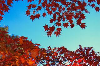 自然,秋,紅葉,もみじ,佐賀県,11月,モミジ,唐津市,環境芸術の森,厳木町