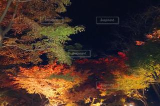 秋,紅葉,もみじ,ライトアップ,鎌倉,Autumn,長谷寺