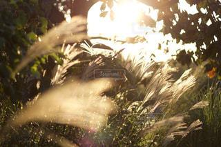 秋色の写真・画像素材[1603537]