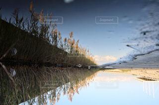 自然,秋,青空,水たまり,水面,ススキ,リフレクション,Autumn,葛西臨海公園,映り込み,反転