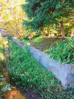 風景,紅葉,小川,長閑