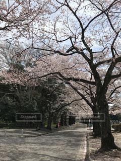 春の写真・画像素材[427797]