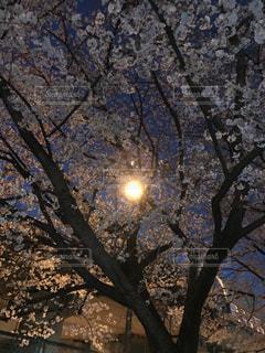 桜,太陽,街,町,津田山