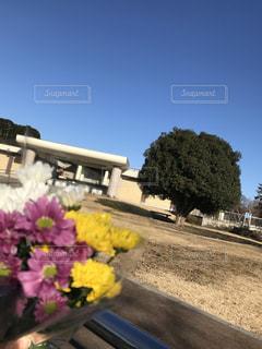 近くの花のアップの写真・画像素材[1382990]