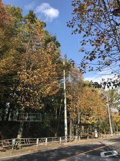秋,横浜市,ガードレール,神奈川県,バス通り