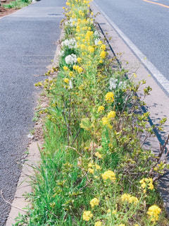 花,緑,黄色,歩道,みどり