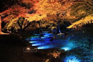 自然,秋,紅葉,イルミネーション,日本庭園,六義園