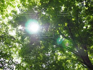 自然,森林,日光,樹木,明るい,大山,草木