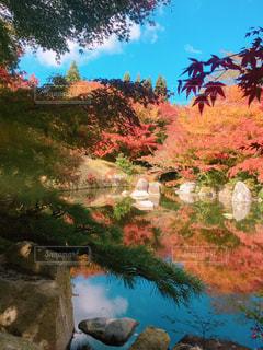 紅葉,もみじ,日本庭園,広島,三景園