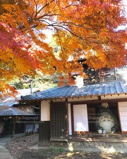紅葉,屋外,樹木,トトロ,埼玉,所沢,クロスケの家