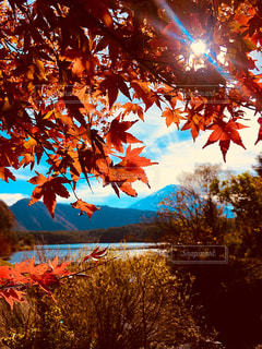 山梨県西湖の紅葉🍁の写真・画像素材[1635261]