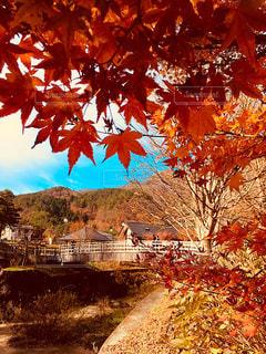 山梨県西湖近くの紅葉の写真・画像素材[1645545]