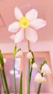 かわいいお花の写真・画像素材[1658605]