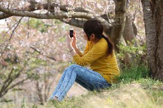 桜の季節の写真・画像素材[1684922]