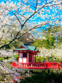 春の写真・画像素材[1952949]
