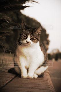 木の表面に座っている猫の写真・画像素材[2859687]