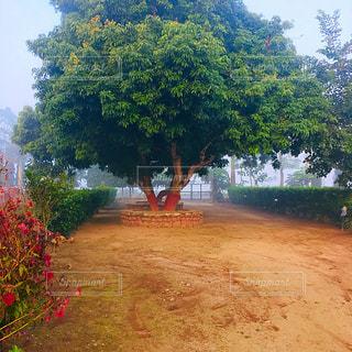 庭の大きな木の写真・画像素材[2871203]