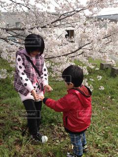 桜の下で仲いい小さな我が子の写真・画像素材[1605990]