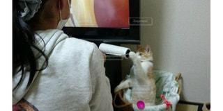 コロコロで遊ぶ猫の写真・画像素材[1626010]