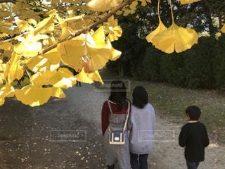 秋散歩の写真・画像素材[1626028]