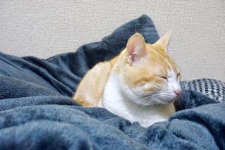 毛布の上に横になっている猫の写真・画像素材[1655108]