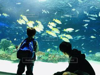 魚,屋内,水族館,泳ぐ,見る