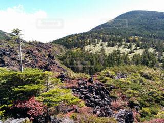 自然,風景,秋,紅葉,屋外,綺麗,景色,長野,八ヶ岳,茅野市,北山